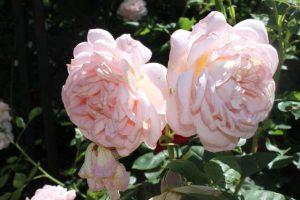 Nie tylko o zbrodni: Elizabeth i jej ogród Elizabeth von Arnim